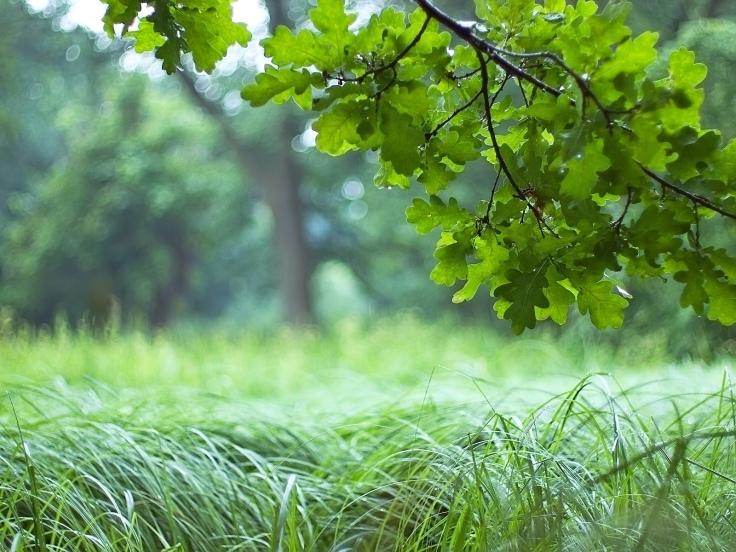 kartinki24_trees_0011