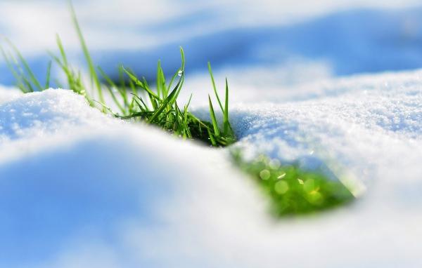 Spring_Grass_33.jpg